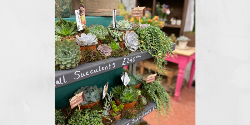 The best indoor succulents on the Isle of Wight